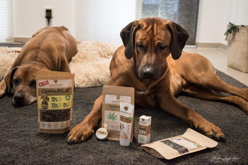 CBD-Hanfprodukte für Hunde: Raban und Suri haben die Produkte von SPARROW Pet getestet