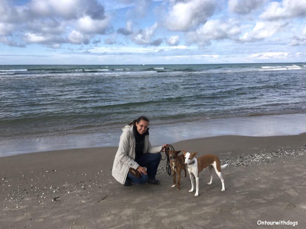 An den Stränden auf Texel ist das Hundeleben besonders frei