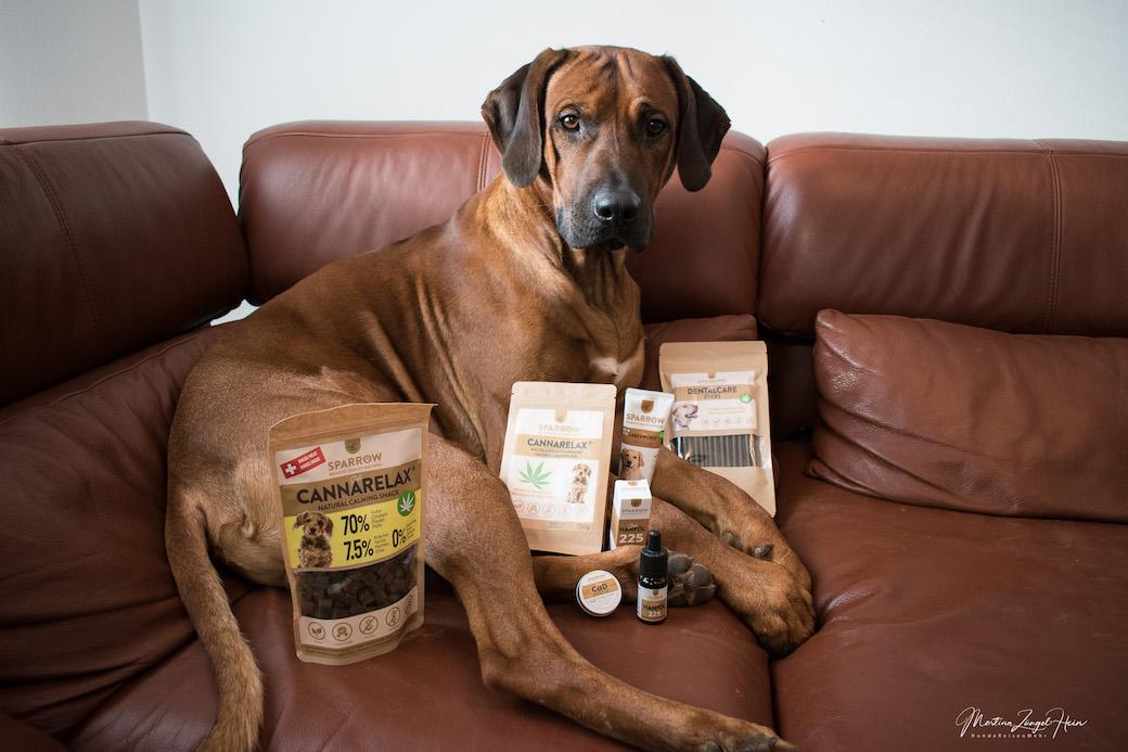 Raban lässt sich brav mit allen CBD-Hanfprodukten von SPARROW Pet ablichten