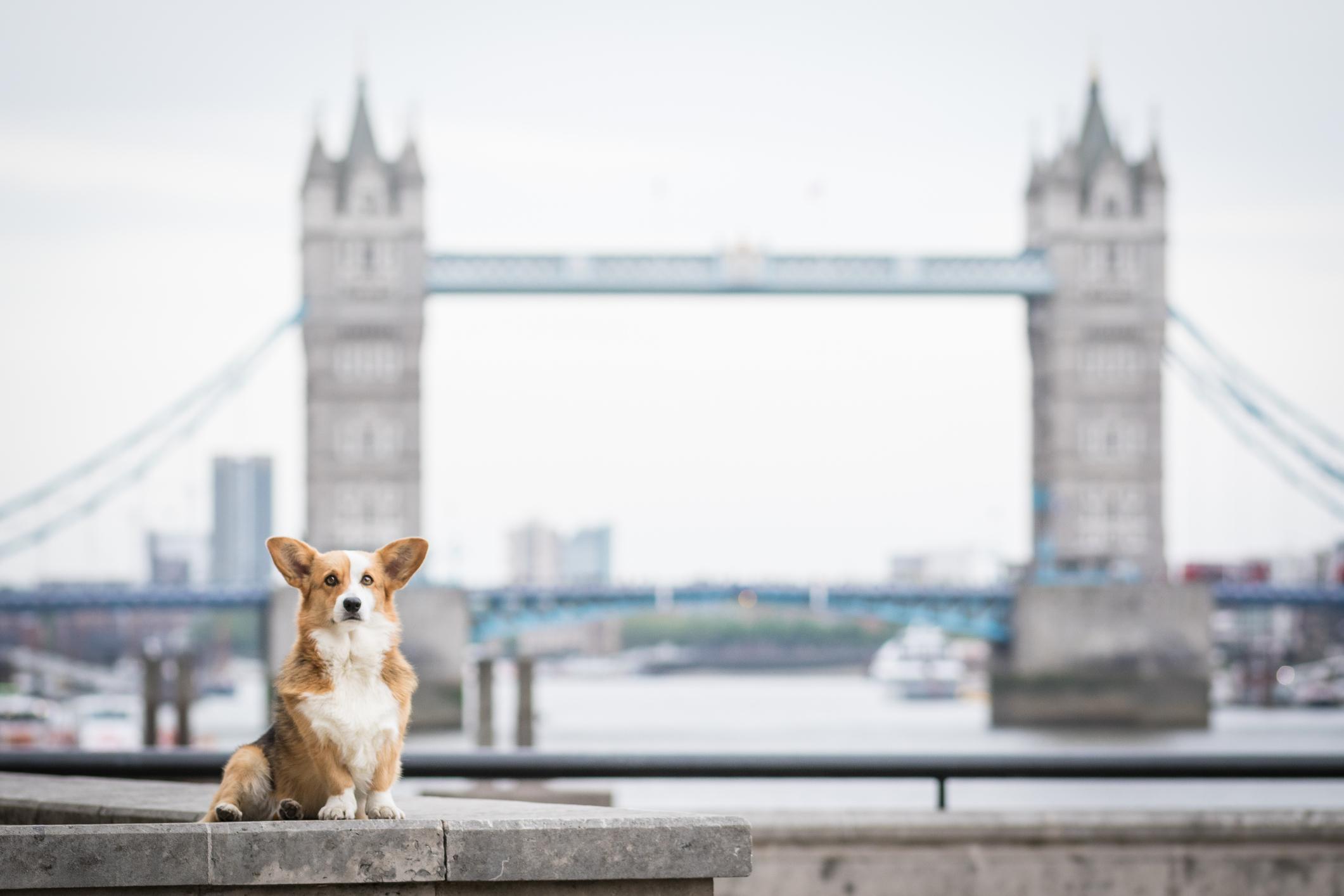 Urlaub mit Hund in London ist schwierig, aber nicht unmöglich