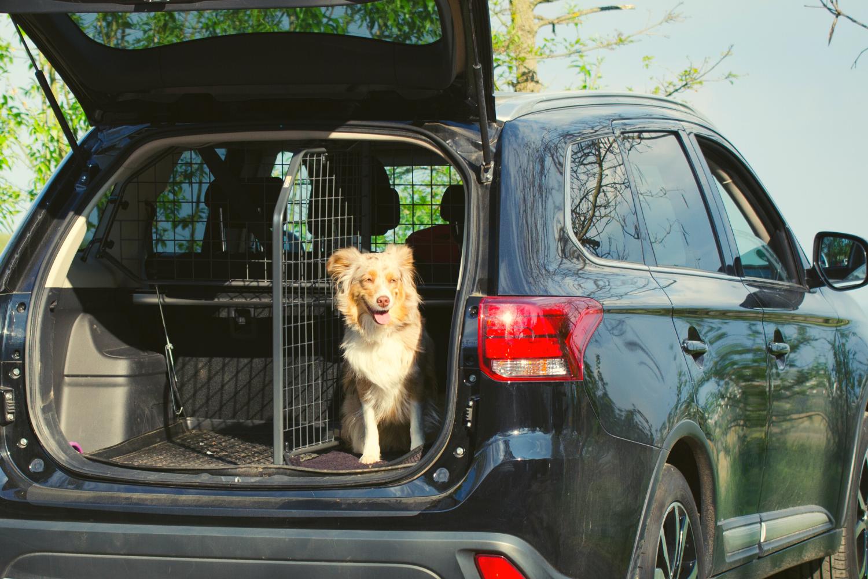 Nicht nur bei einem Urlaub mit Hund sollte der Vierbeiner im Auto gut gesichert sein.