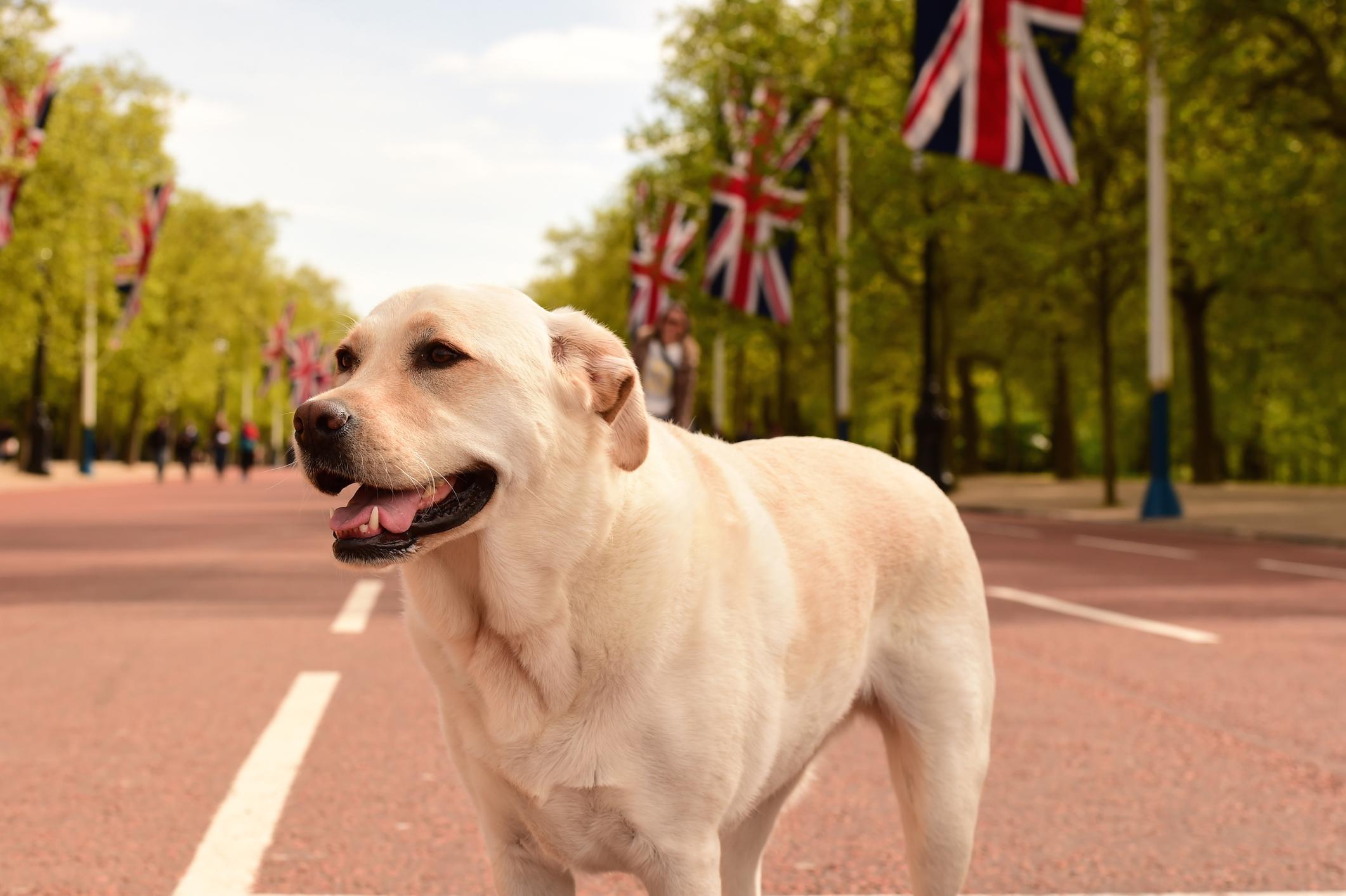 Großbritannien ist hundefreundlich und damit gut geeignet für einen Urlaub mit Hund