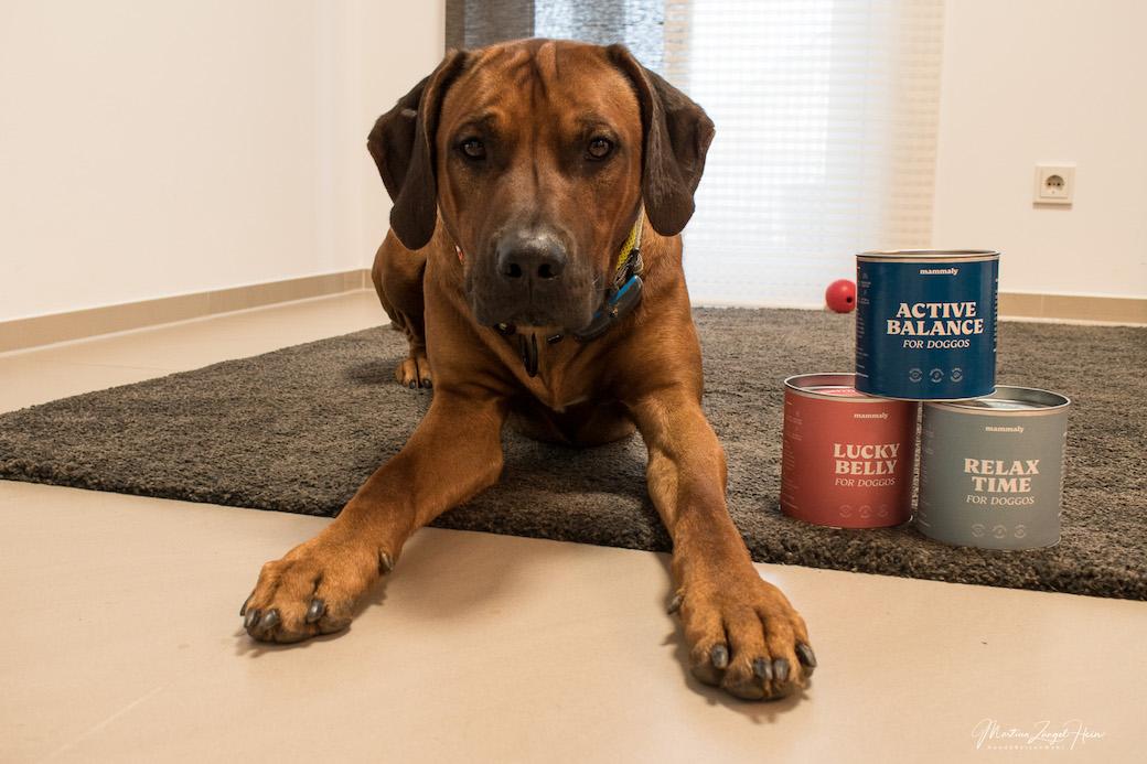 Gesunde Hundesnacks von mammaly für Raban: Lucky Belly, Relax Time und Pure Taste