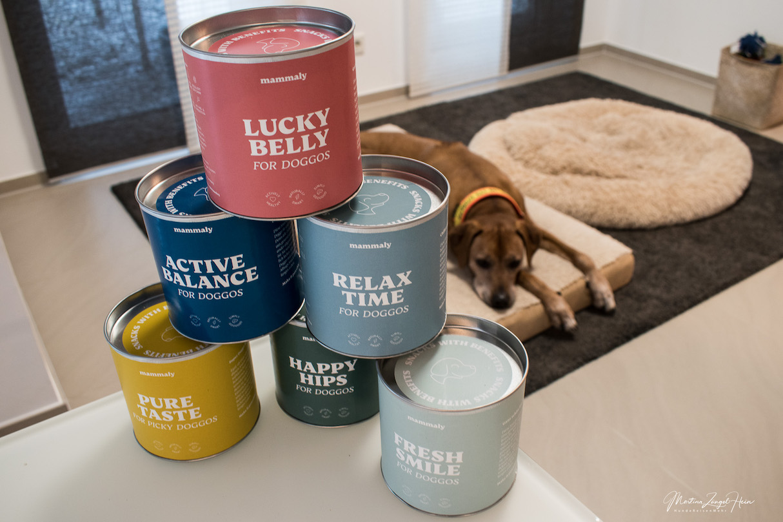 Sechs gesunde Hundesnacks mit Benefits