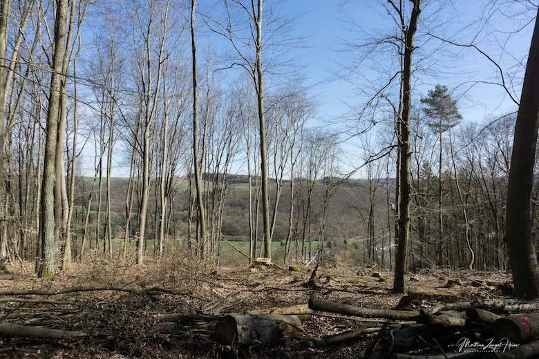 Blick durch die Bäume auf Bladernheim