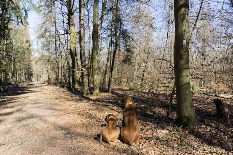 Sonnenschein und angenehme Wanderwege - die ideale Mittagspause
