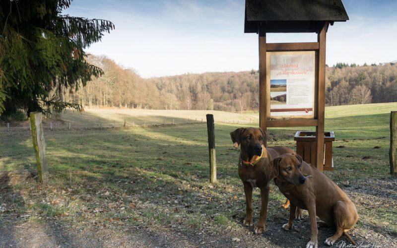 Mit Hund auf die Wäller Tour Buchfinkenland zu gehen, heißt auch einmal Pause zu machen - beispielsweise dort, wo einst ein Dorf stand