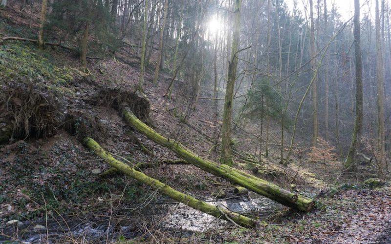 Entwurzelte Bäume säumen unseren Weg