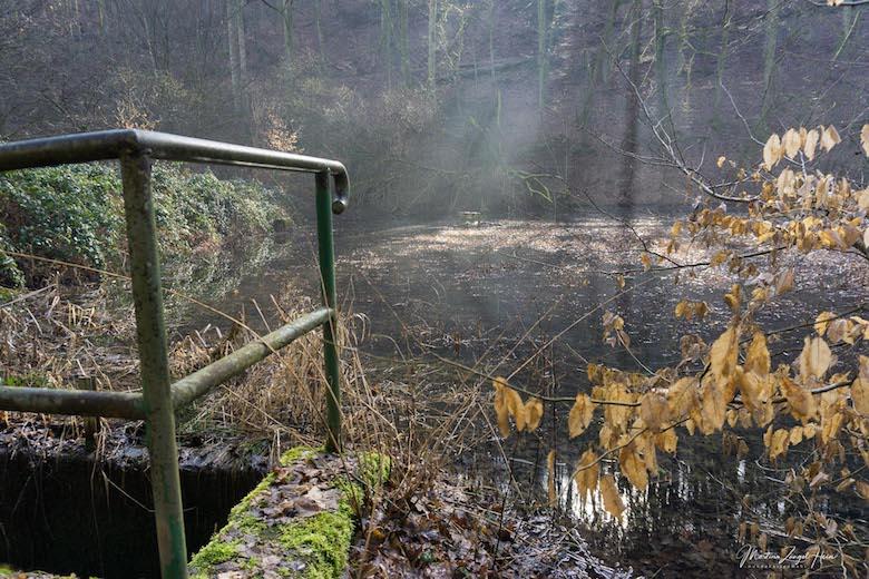Verwunschene Fischweiher mitten im Wald