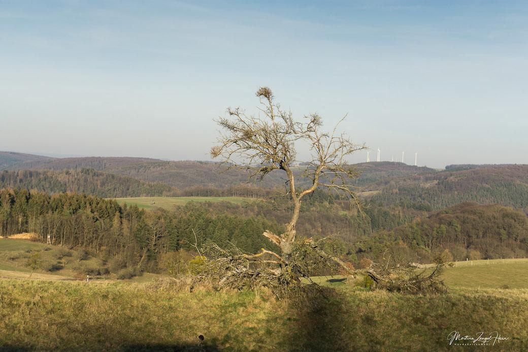 Herrlicher Ausblick zwischen Horbach und Gackenbach