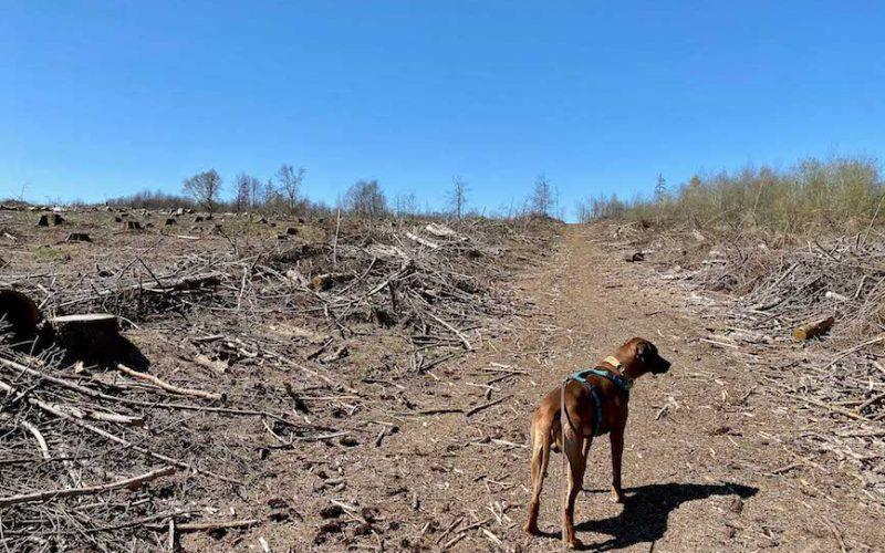 Raban staunt nicht schlecht, dass hier überhaupt keine Bäume mehr stehen.