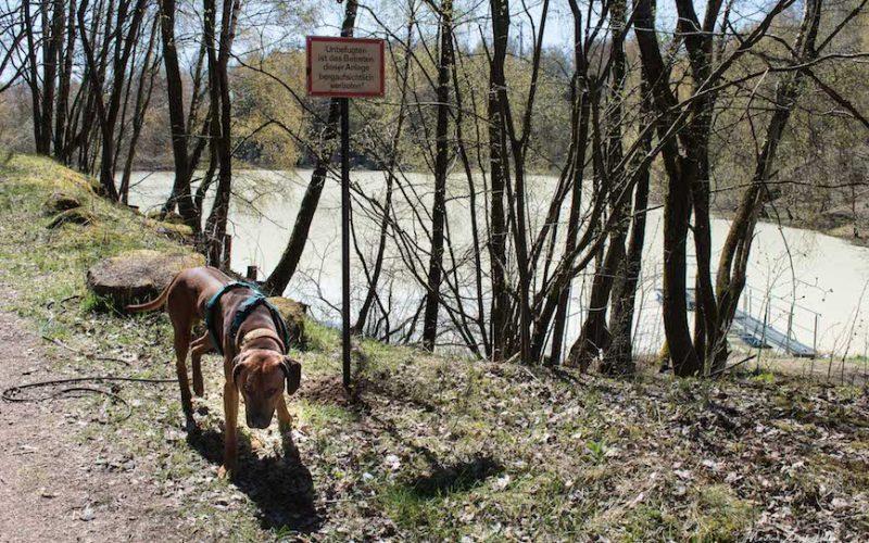 Leider ist es verboten, das Gelände rund um den Tongrubenweiher zu betreten.
