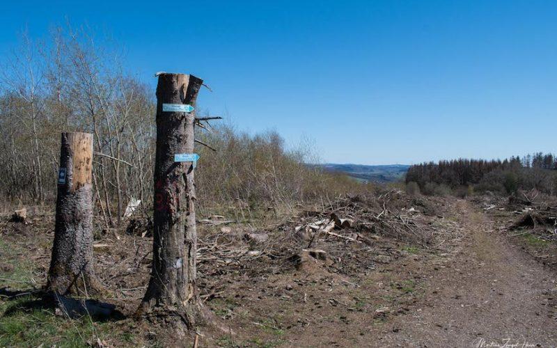 Die Wegweiser für den Wasser-Erlebnis-Pfad befinden sich hier an Baumstümpfen.