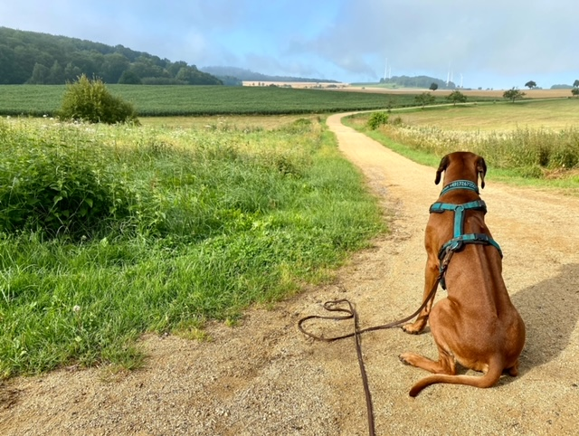 3 Tipps für den schwierigen Reisehund