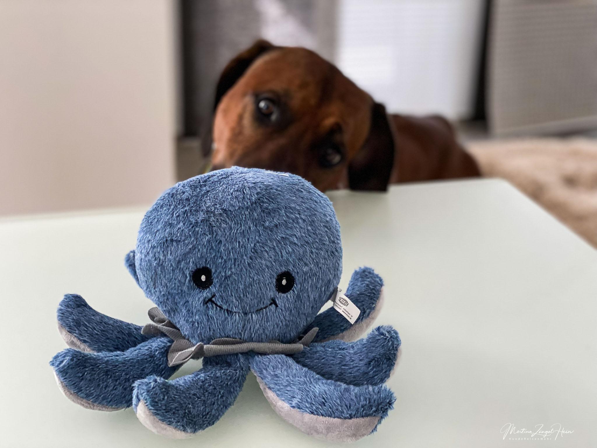 Lieblingsprodukt von Raban ist der Octopus Ocke