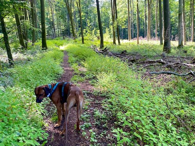 Im Wald am Schönberger Kopf geht es dann bergauf