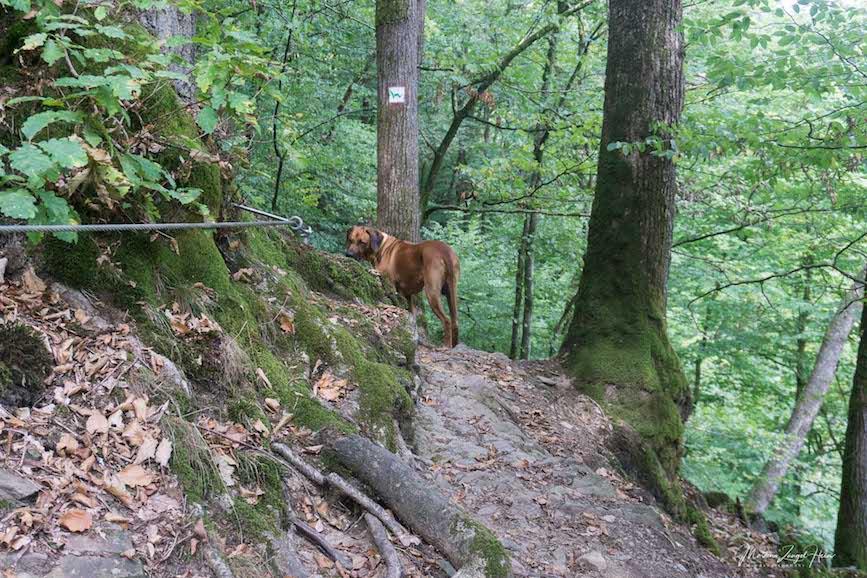 Für Dayo ist die WesterwaldSteig-Etappe 10 überhaupt kein Problem, und er wartet immer brav auf mich