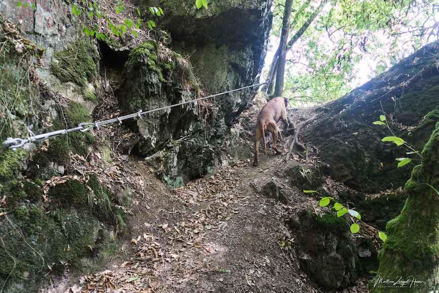Ein Teilstück des WesterwaldSteigs Etappe 10 verläuft über den Naturpfad Weltende