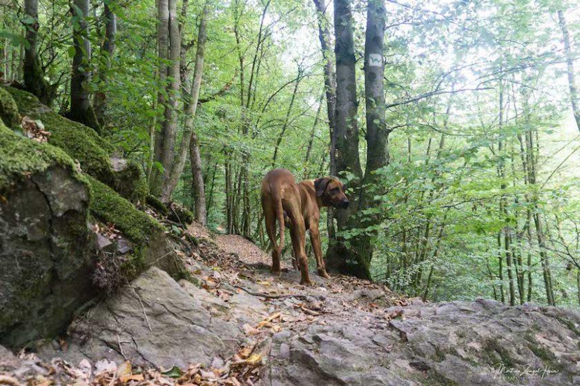 WesterwaldSteig Etappe 10 auf 4 Pfoten