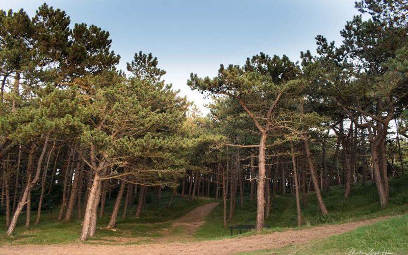 Der Wald am Leuchtturm wurde zum Schutz der Dörfer von Menschenhand angelegt